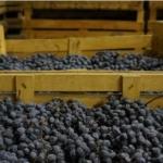 アマローネ ワインとは?特徴とブドウ品種、合わせる料理