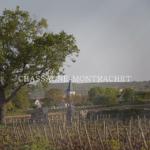 シャサーニュモンラッシェとは?特徴とブドウ品種、合わせる料理