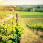 ガイヤック ワインとは?特徴とブドウ品種、合わせる料理