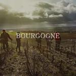 ブルゴーニュワインの基礎知識|全体像と特徴をおさえよう