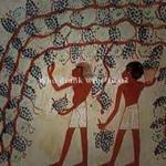 ワインの起源|誰が最初にワインを飲んだのか?